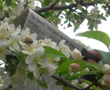 no-bees.jpg