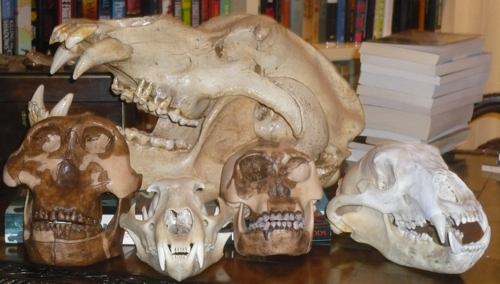Skulls in our library.  See bottom of post for description.