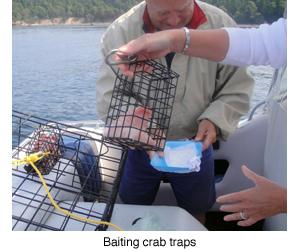 Baiting trap blog