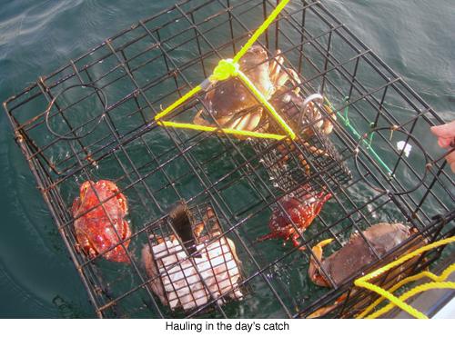 The catch blog